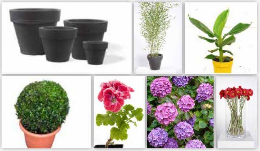 vente de d stockage plantes fleurs d co